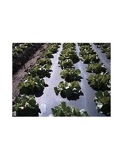 Biotelo Agri - l'originale telo per pacciamatura biodegradabile - conf.1 m per 100 m