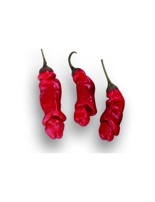 Sementi Peperoncino Peter Red Piccante