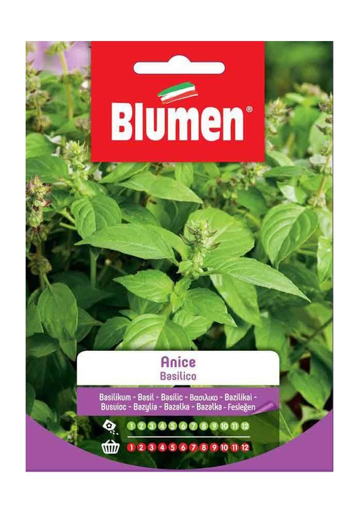 Basilico Anice - Blumen