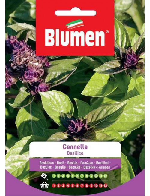 Basilico Cannella - Blumen