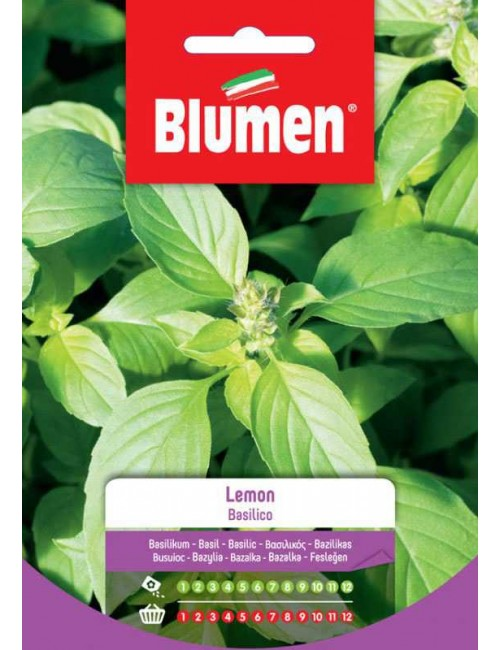 Basilico Lemon - Blumen