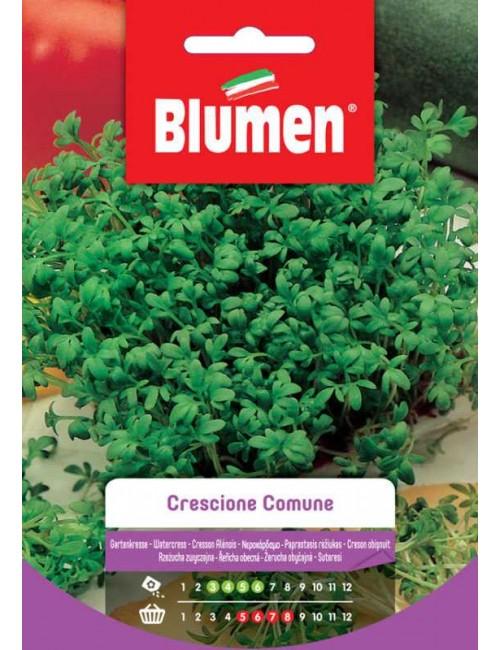Crescione Comune - Blumen
