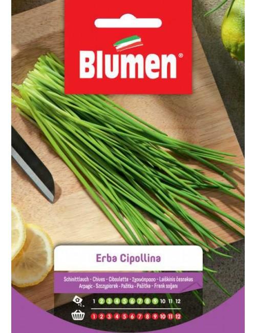 Erba Cipollina - Blumen