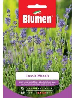 Lavanda officinalis - Blumen