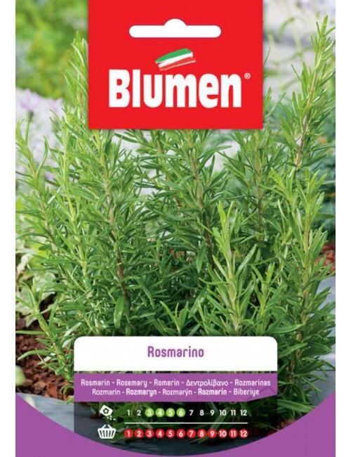 Rosmarino- Blumen