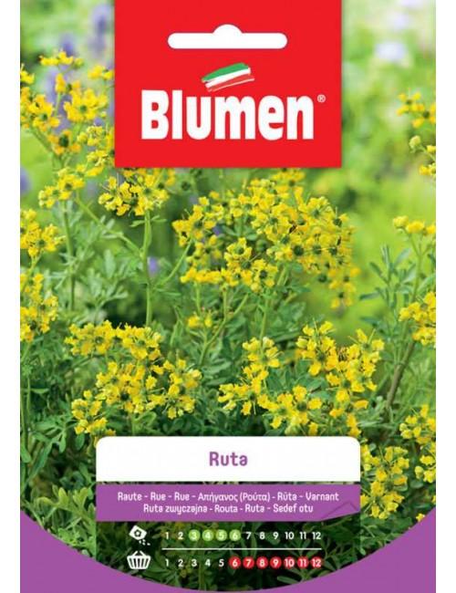 Ruta - Blumen