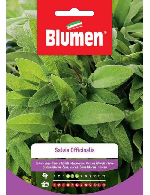 Salvia Officinalis - Blumen