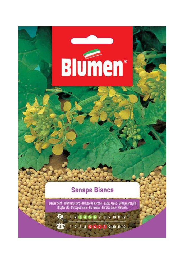 Senape Bianca - Blumen