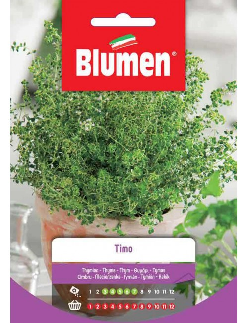 Timo - Blumen