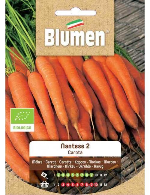 Carota Nantese 2 Bio - Blumen