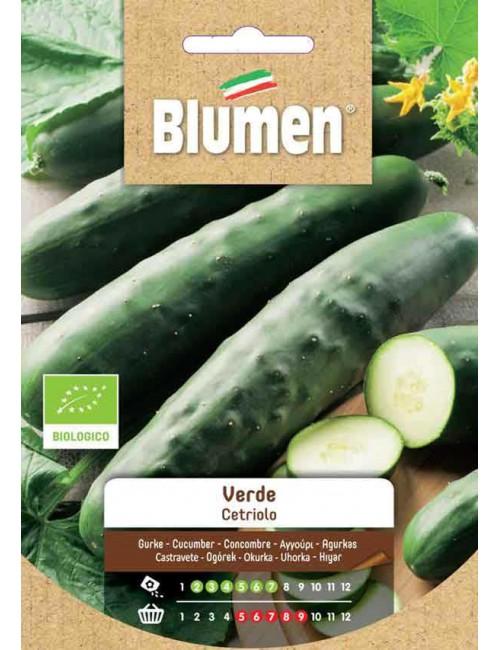 Cetriolo Verde Bio - Blumen