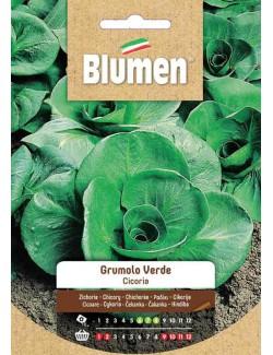 Cicoria Verde Bio - Blumen