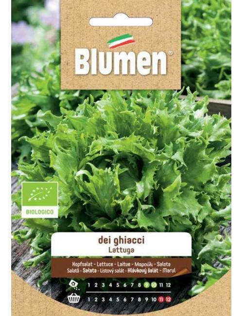 Lattuga dei Ghiacci Bio - Blumen