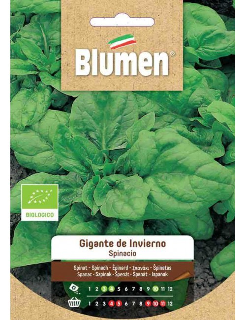 Spinacio Liscio Gigante D'inverno Bio - Blumen
