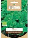Valeriana D'Olanda Bio - Blumen