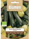Zucchino Scuro Black Beauty Bio - Blumen