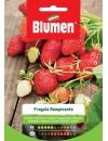 Fragola di Bosco - Blumen
