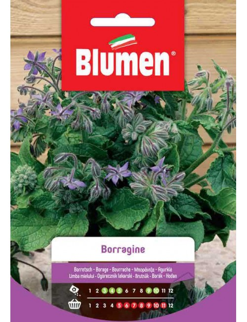 Borragine- Blumen