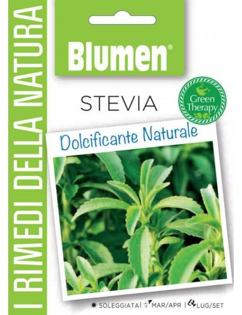 Stevia - Blumen