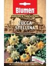 Zucca Stellina - Blumen