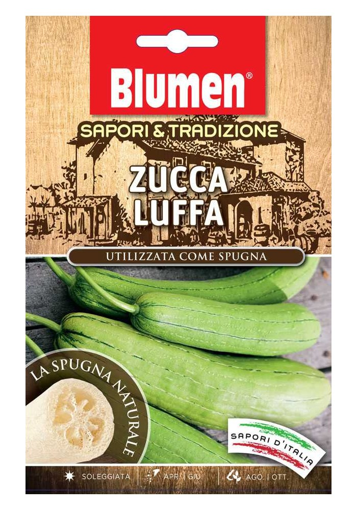 Zucca Luffa - Blumen