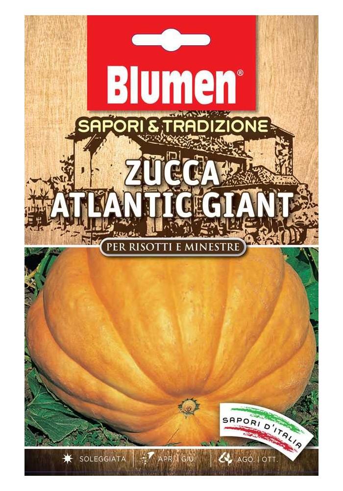Zucca Atlantic Giant - Blumen