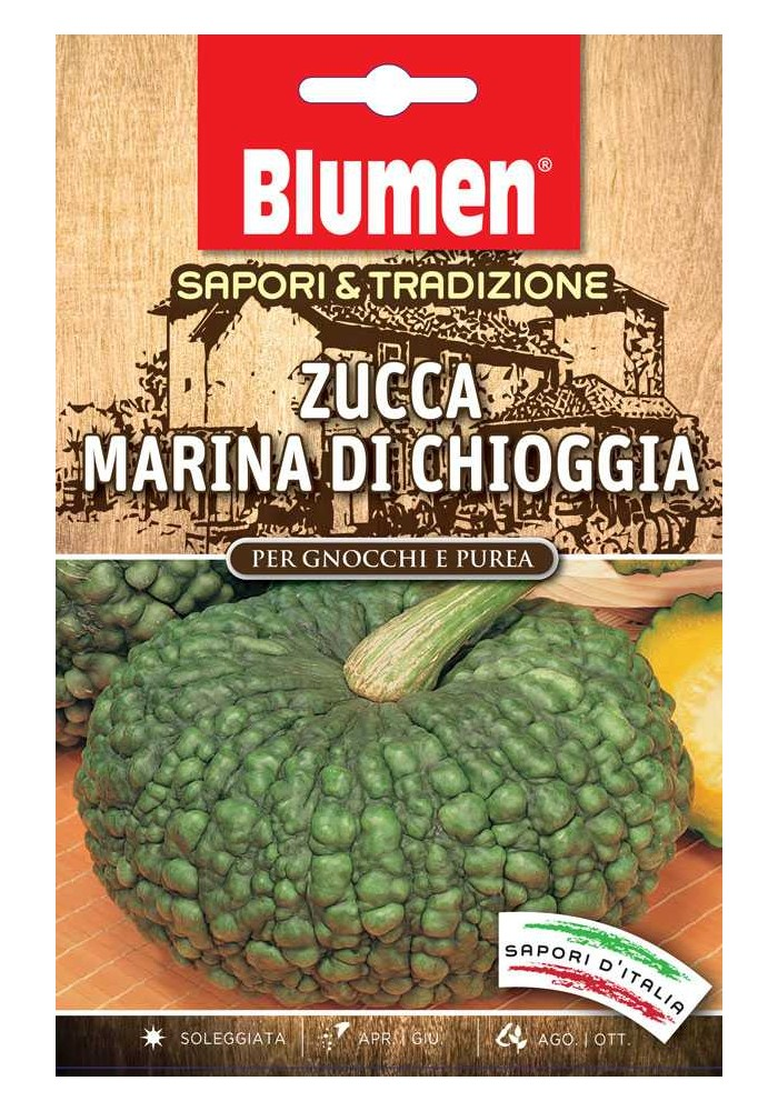 Zucca Marina di Chioggia - Blumen
