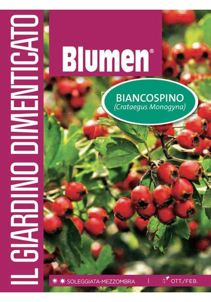Biancospino - Blumen
