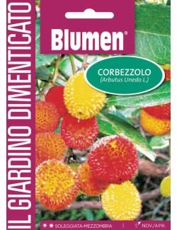 Corbezzolo - Blumen