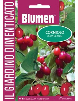 Corniolo - Blumen