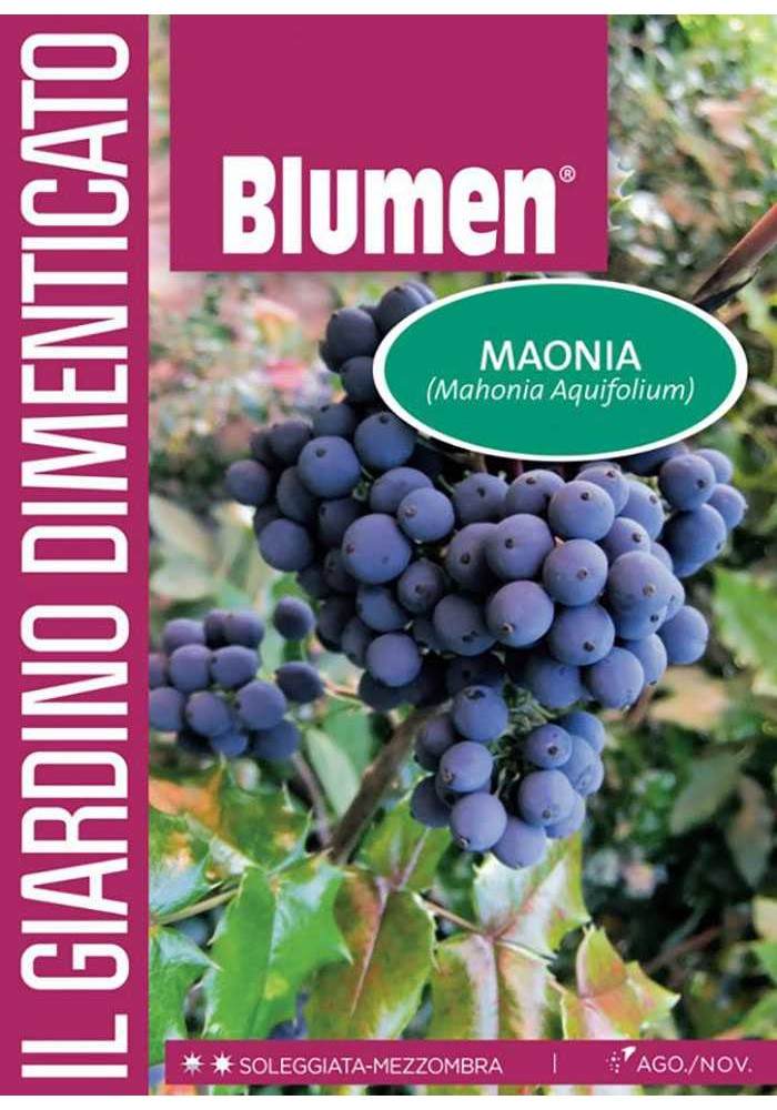 Maonia - Blumen