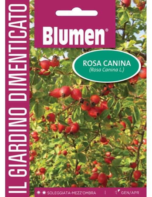 Rosa Canina - Blumen