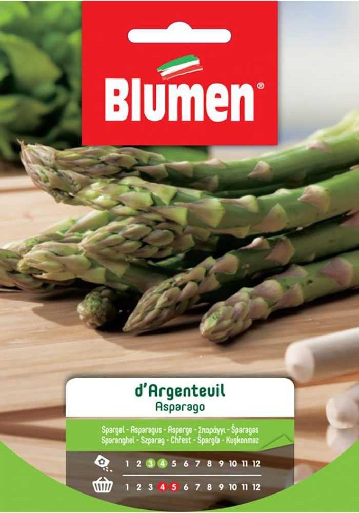 Asparago D'argentuil - Blumen