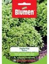 Basilico a Foglia Fine - Blumen