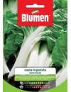 Bieta Bionda a Costa Argentata - Blumen