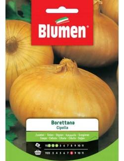 Cipolla Borettana - Blumen