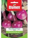 Cipolla Rossa di Tropea - Blumen
