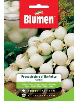 Cipolla Precocissima di Barletta - Blumen