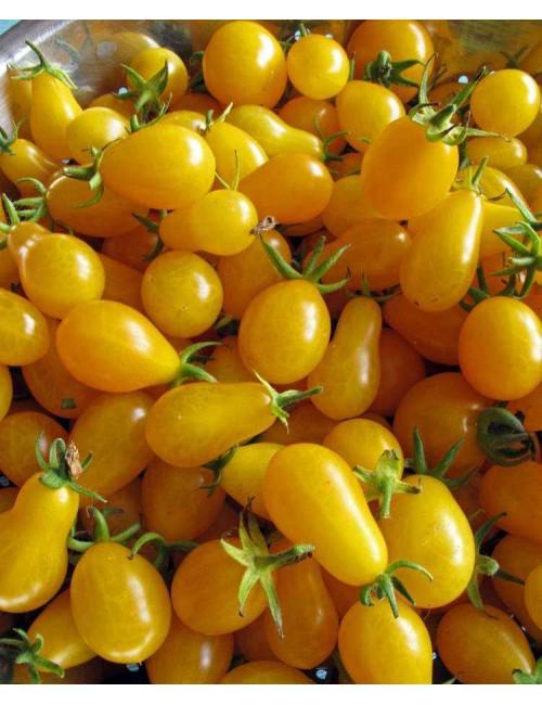Pomodoro Yellow Pear - Blumen