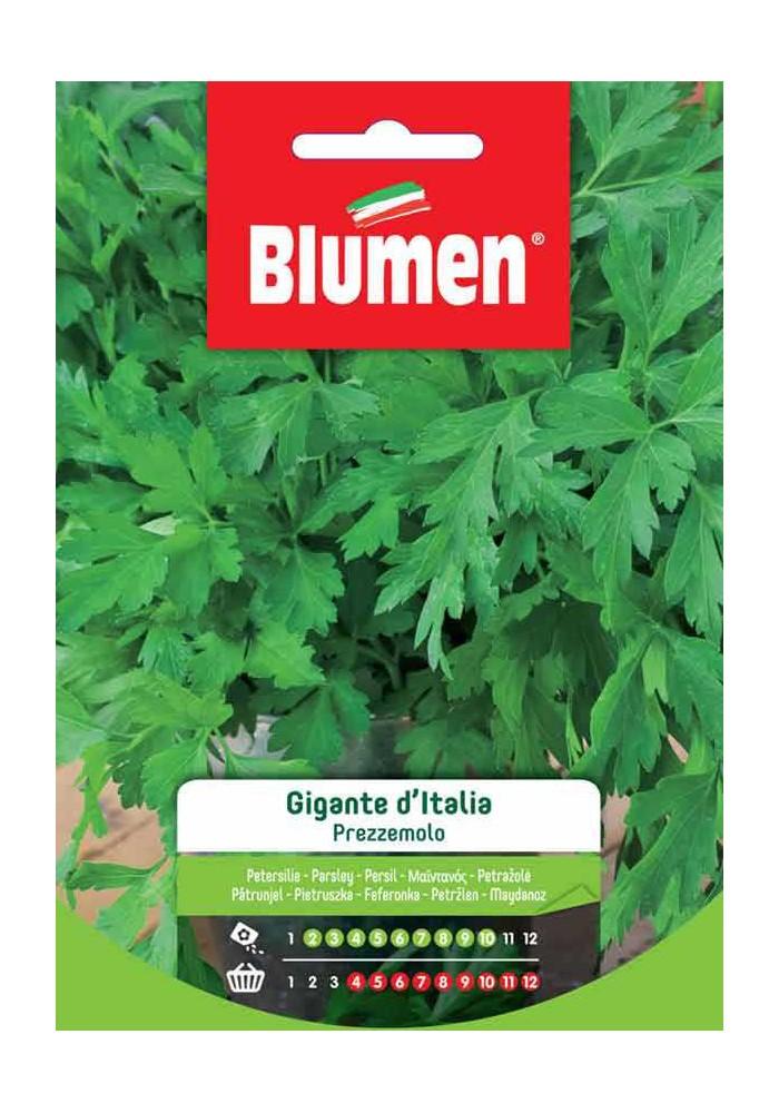 Prezzemolo Gigante D'Italia - Blumen