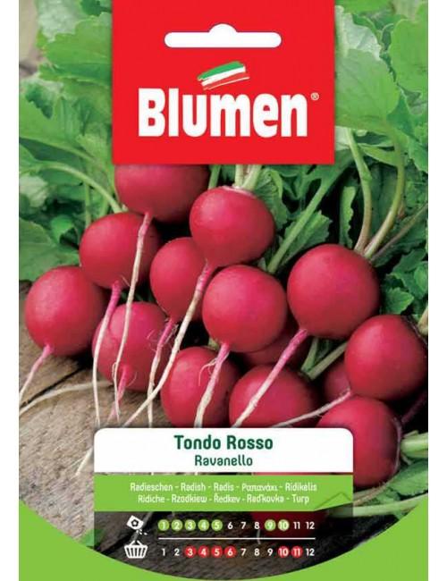 Ravanello Tondo Rosso - Blumen