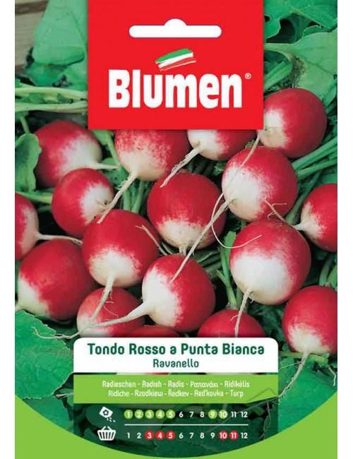 Ravanello Tondo Rosso a Punta Bianca - Blumen