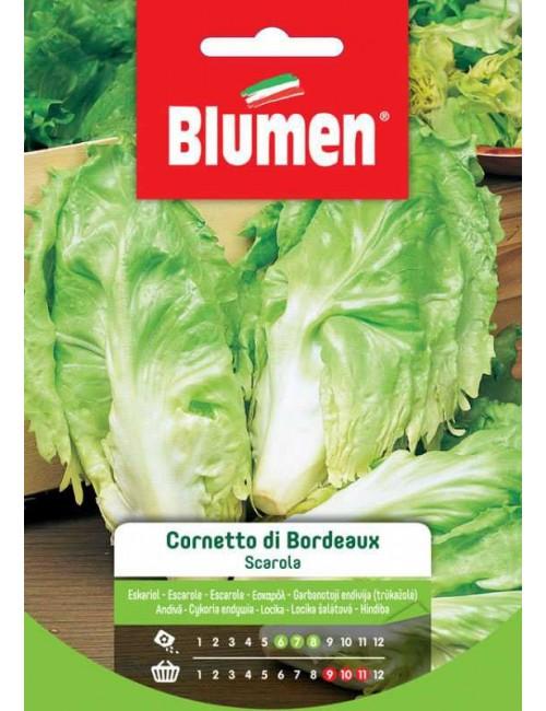 Scarola Cornetto di Bordeaux - Blumen