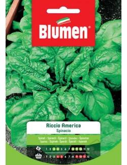 Spinacio Riccio America - Blumen