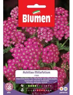 Achillea Millefolium Rosa - Blumen