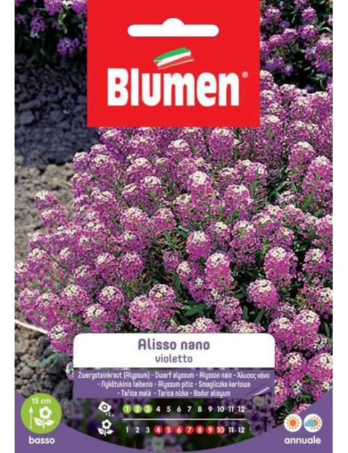 Alisso Violetto Nano - Blumen