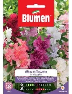 Altea o Malvone in Miscuglio - Blumen