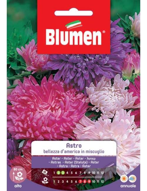 Astro Bellezza America - Blumen