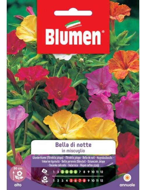 Bella di Notte in Miscuglio - Blumen