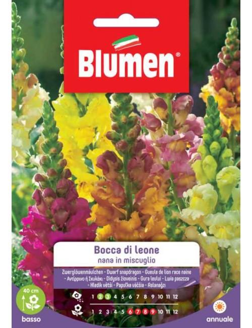 Bocca di Leone Nana in Miscuglio - Blumen